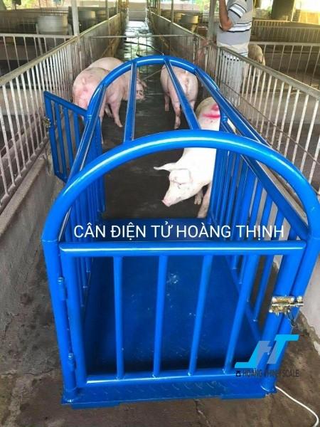Cân heo điện tử là mẫu cân động vật được Cân Hoàng Thịnh lắp đặt tại các trại chăn nuôi heo với mức cân 500kg, 1 tấn, 2 tấn cho việc cân 1 con 2 con 3 con nhiều con chốt khối lượng